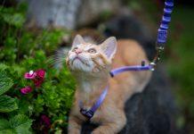 Why should I walk my cat?